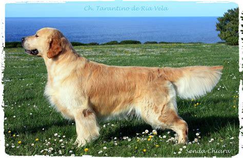 duendes peq duende adiestramiento canino en zaragoza senda chiara