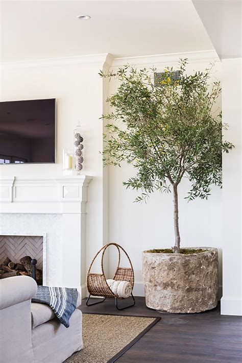 Vintage Boho Home Decor by Indoor Olive Trees