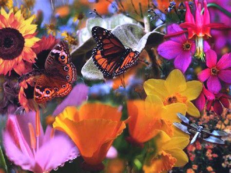 fiori e fiori raggio di fiore raggio di fiore