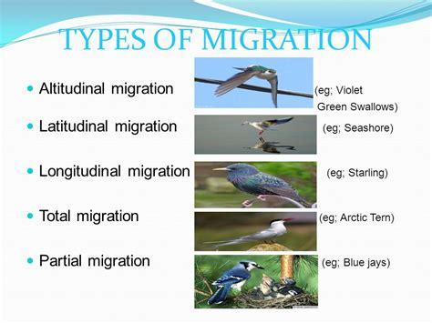 bird migration dr dalip kumar ppt video online download