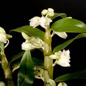 gestaltungsideen durch orchiden orchideen pflanzen biorhythmuskalender