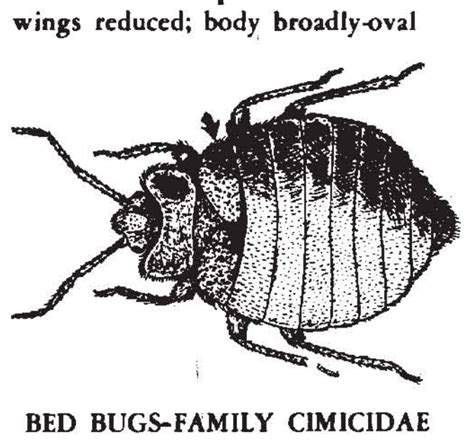 can animals carry bed bugs can cats carry bed bugs pets adviser