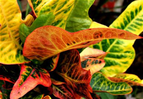 free stock photos rgbstock free stock images foliage colour2 tacluda june 18 2011 30