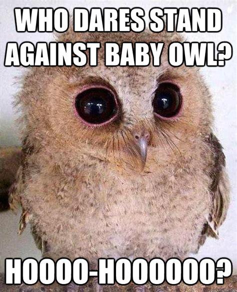 Who Owl Meme - who dares stand against baby owl hoooo hoooooo who