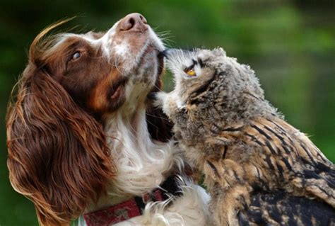 b3 the baby eagle based on a true story books the spaniel bramble the baby eagle owl photo by