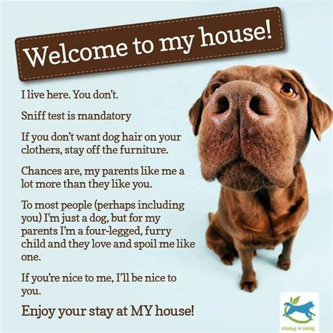 dog house rules 233 best images about monroe my furbaby on pinterest plaid for dogs and bow ties