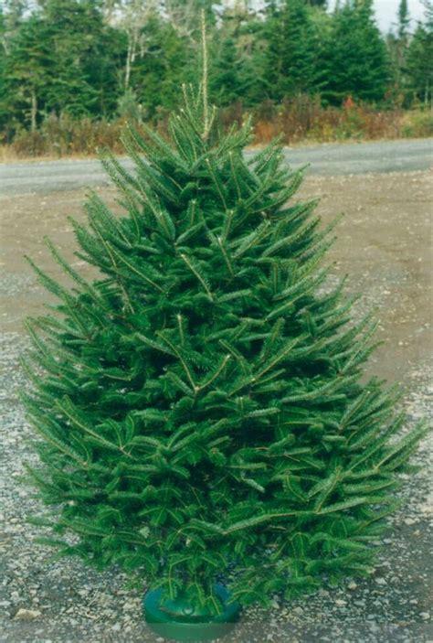 arboles navidad naturales pinos navidad variedades