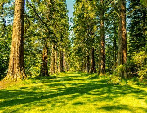 imagenes de paisajes naturales bosques las mejores fotograf 237 as del mundo los hermosos bosques de