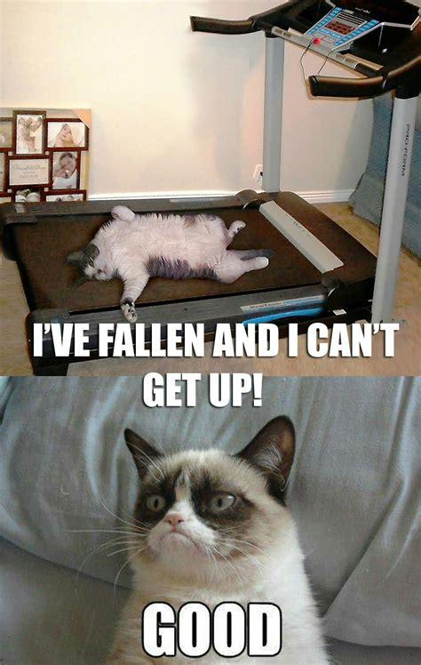 Life Alert Lady Meme - grumpy cat december 2012