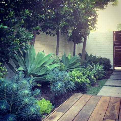 pour couloir face a la porte d entree succulents and structural plants hardscapes landscape