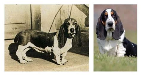 fascinating    dog breeds looked