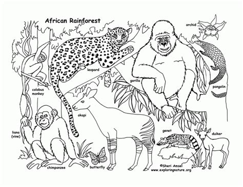 printable coloring pages rainforest animals free printable rainforest coloring pages coloring home