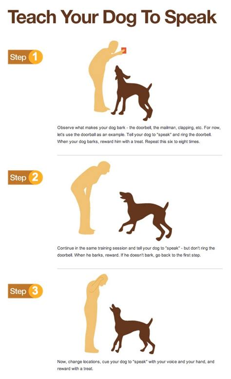 how to train your dog to go to the bathroom how to train dogs to go to the bathroom outside 28 images how to train a puppy not