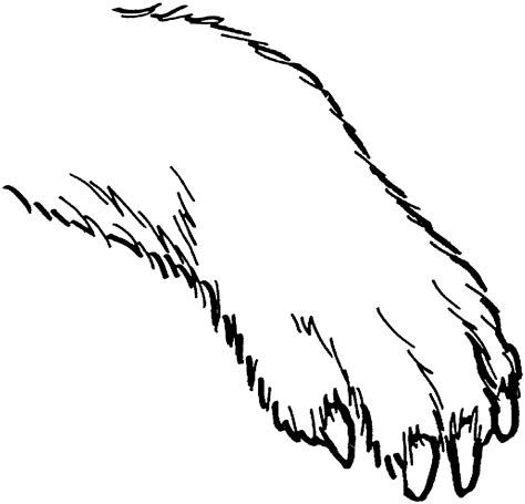 coloring pictures of paws how to draw paws clipart best