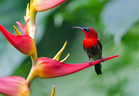 beautiful birds phots beautiful birds hd wallpapers colorful hq desktop images