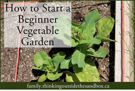Beginner Vegetable Garden Layout How To Start A Beginner Vegetable Garden Tots Family Gardens The O Jays And Vegetables