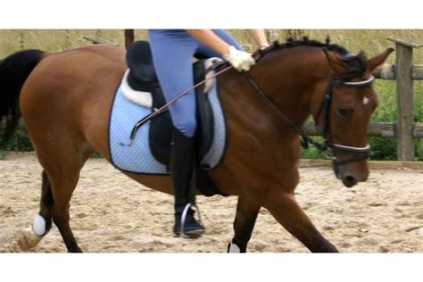 h uschen kaufen gesucht pferdemarkt in erftstadt kaufen bei deine tierwelt de