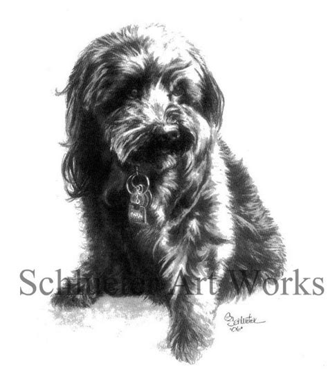 yorkie sketch 34 best images about small breed i ve sketched on chihuahuas poodles