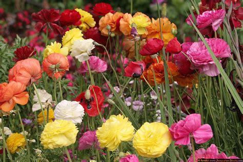 botanical gardens flowers jerusalem photos botanic garden botanical garden flowers