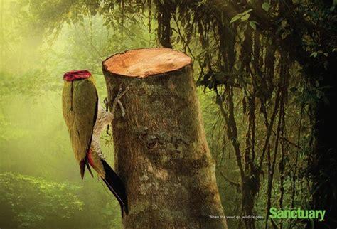 imagenes ecologicas impactantes impactante ca 241 a contra la tala de 225 rboles