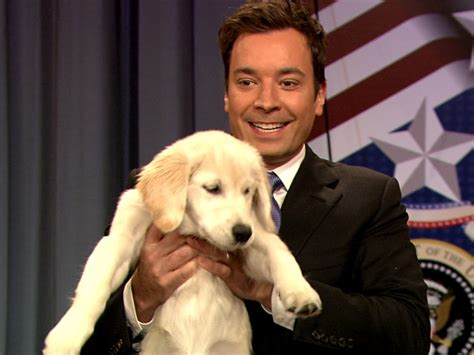 jimmy fallon puppies pin by cosgray on looking gentlemen