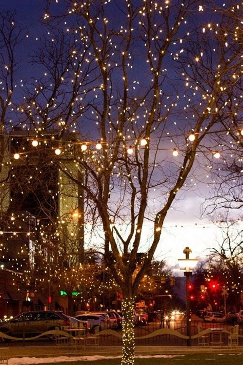 fort collins lights fort collins downtown lights