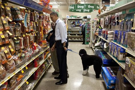 house dog breeds white house dogs the obama dog is a portuguese water dog the dog guide