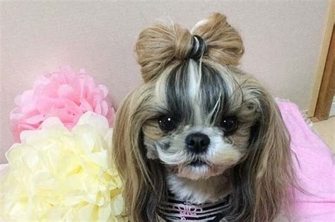 dogs with hair 22 of the fiercest hairstyles on the planet