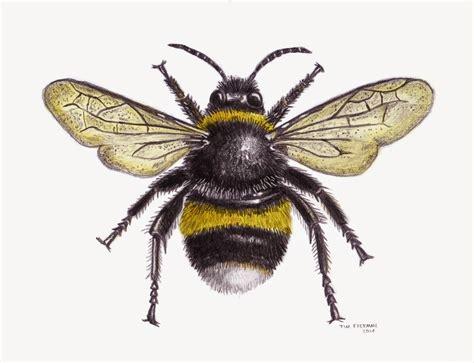 bee color tim freeman design illustration bumble bee
