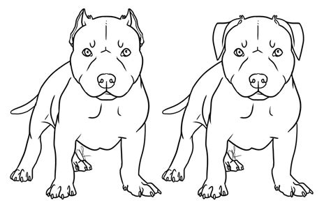coloring pages pitbull puppies pitbull coloring pages to download and print for free