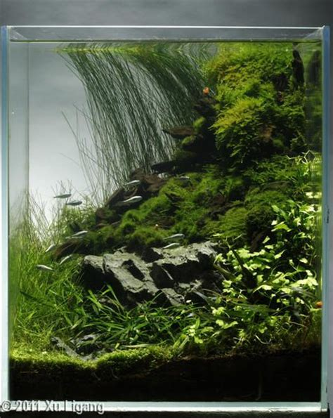 Aquascape Fish by 262 Best Aquariums Terrariums Vivariums Images On