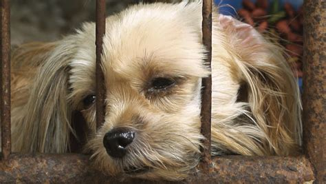 lonely puppy lonely in cage stock footage 10046267