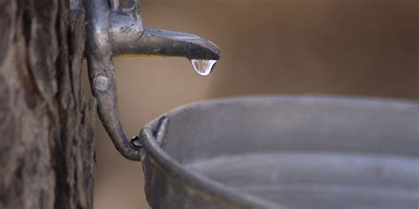 Water Sap here s why maple water isn t the new anything huffpost