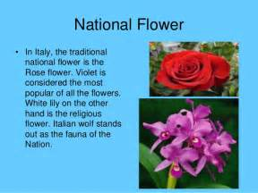 Stylized Lily Flower - image gallery italy national flowers lilly