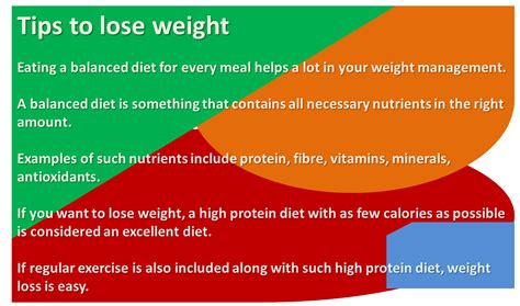 how many times should i feed my how many calories should i eat to lose weight fast and easy