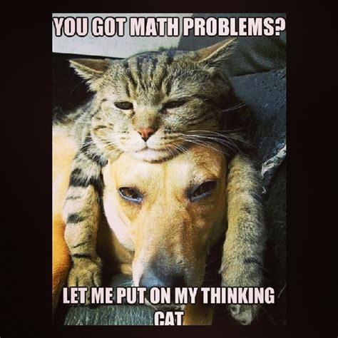 Thinking Cat Meme - image gallery math funny dog