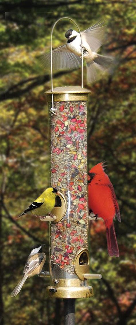 backyard bird feeder how to attract the most colorful birds to your backyard