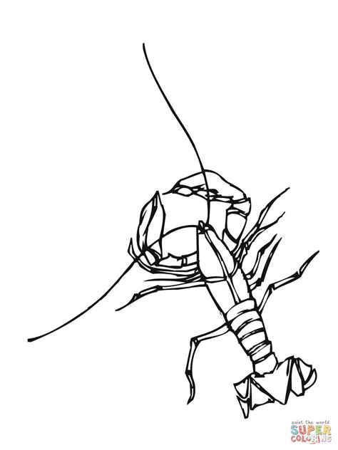 Crawfish Freshwater Crustacean Coloring Page Free Crayfish Coloring Page