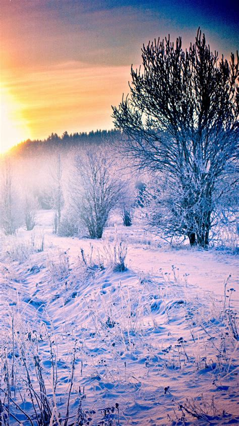 winter snow forest trail iphone wallpaper wallpapers