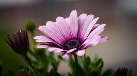 L Use An Blumen 4425 by Purple Petal Flower 183 Free Stock Photo