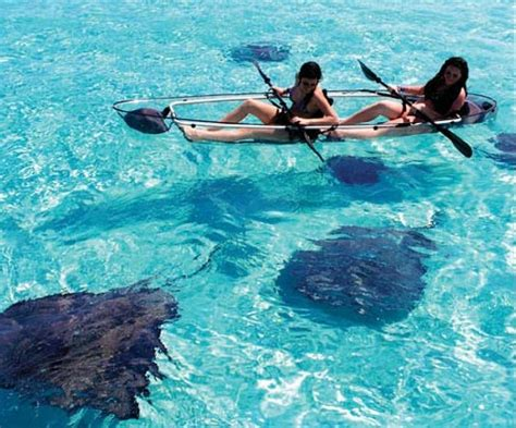 clear kayak transparent kayak let s you enjoy the views above and