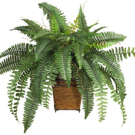 silk plants boston fern in wood wicker basket 6549