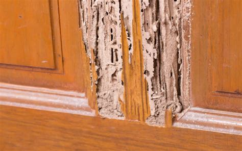 termite custom woodworks how to fight the problem with termite damage in