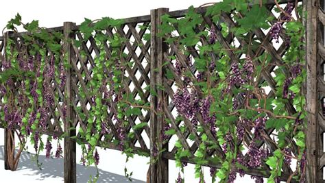 fence with vine tendrils in wind stock footage video 8987548 shutterstock