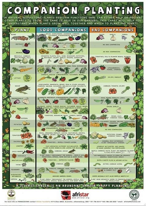1000 ideas about companion planting guide on pinterest companion planting guide graphic farm pinterest