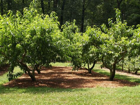 compost for fruit trees farm calls aerated compost bins on a nj farm