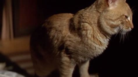 cat rage room rage 1972 cinema cats