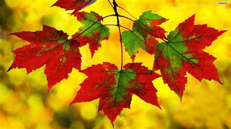 autumn wallpaper hd android fall leaf hd desktop background wallpapers 11005 amazing