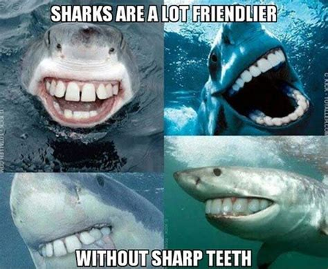 Meme Shark - shark week 2017 best funny memes heavy com