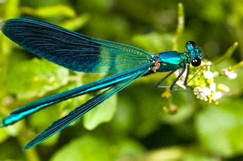 images of dragonflies do dragonflies breathe wonderopolis